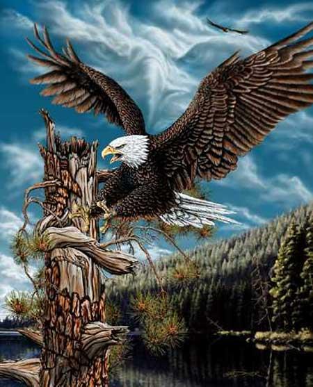 Фото синей птицы и хищные птицы