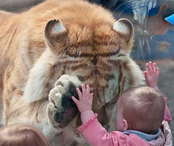 Забавные животные - Страница 6 6958_big