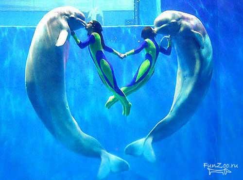 Дельфины - прекрасные кавалеры...