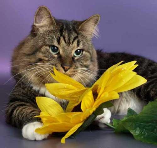 Кот романтик