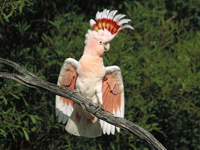 Попугай какаду любопытен упаду
