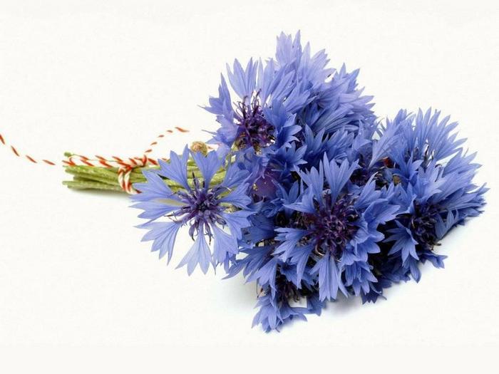 Васильки васильки синие цветы