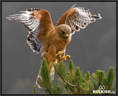 Фотографии хищных птиц.