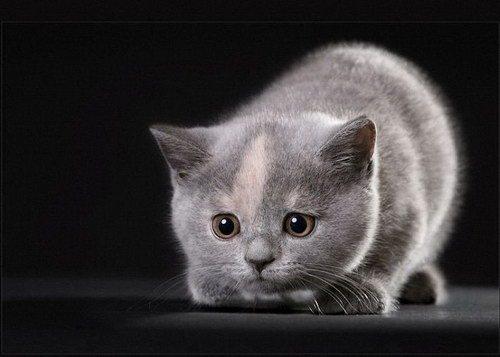 Кошки скорее всего похожи на