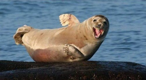 морские котики скачать игру - фото 4